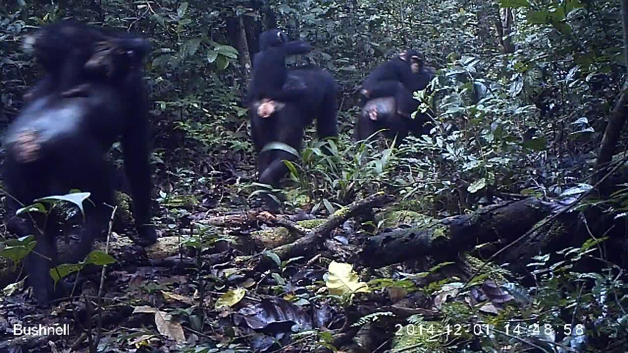 Chimp & See Talk